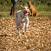 Cotswold Gundog Hunting Skills Training Day 7D-132