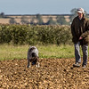 Cotswold Gundog Hunting Skills Training Day 7D-109
