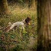 Cotswold Gundog Hunting Skills Training Day 7D-179
