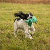 Cotswold Gundog Hunting Skills Training Day 7D-257