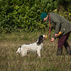 Cotswold Gundog Hunting Skills Training Day 7D-58