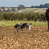 Cotswold Gundog Hunting Skills Training Day 7D-106