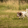 Cotswold Gundog Hunting Skills Training Day 7D-240