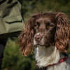 Cotswold Gundog Hunting Skills Training Day 7D-10