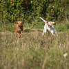 Cotswold Gundog Hunting Skills Training Day 7D-48