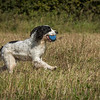 Cotswold Gundog Hunting Skills Training Day 7D-57