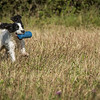 Cotswold Gundog Hunting Skills Training Day 7D-55