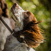 Cotswold Gundog Hunting Skills Training Day 7D-105