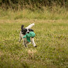 Cotswold Gundog Hunting Skills Training Day 7D-253