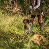 Cotswold Gundog Hunting Skills Training Day 7D-162