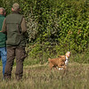 Cotswold Gundog Hunting Skills Training Day 7D-47