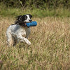 Cotswold Gundog Hunting Skills Training Day 7D-56