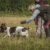 Cotswold Gundog Hunting Skills Training Day 7D-74