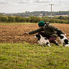 Cotswold Gundog Hunting Skills Training Day 7D-270