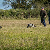 Cotswold Gundog Hunting Skills Training Day 7D-85