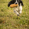 Cotswold Gundog Hunting Skills Training Day 7D-237