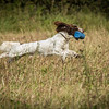 Cotswold Gundog Hunting Skills Training Day 7D-63