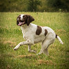 Cotswold Gundog Intro To Shooting Day 7D -7