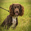 Cotswold Gundog Intro To Shooting Day 7D -15