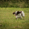 Cotswold Gundog Intro To Shooting Day 7D -5