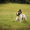 Cotswold Gundog Intro To Shooting Day 7D -10