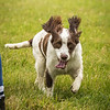 Cotswold Gundog Intro To Shooting Day 7D -12