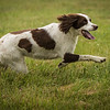 Cotswold Gundog Intro To Shooting Day 7D -3