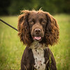 Cotswold Gundog Intro To Shooting Day 7D -17