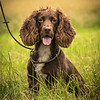 Cotswold Gundog Intro To Shooting Day 7D -19
