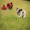 Cotswold Gundog Intro To Shooting Day 7D -8