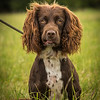 Cotswold Gundog Intro To Shooting Day 7D -16