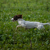 Cotswold Gundogs Shoot Skills Training Day 7d-54