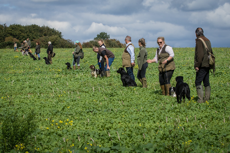 Cotswold Gundogs Shoot Skills Training Day 7d-184