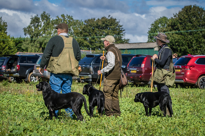 Cotswold Gundogs Shoot Skills Training Day 7d-41
