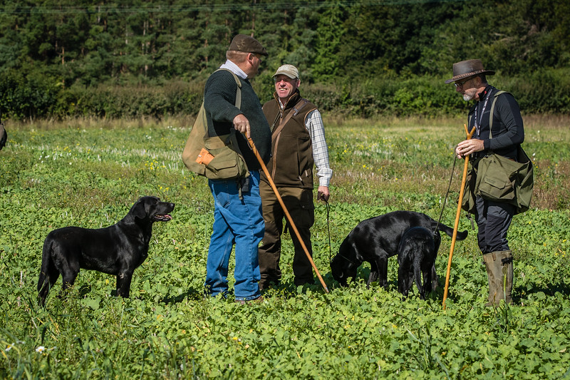 Cotswold Gundogs Shoot Skills Training Day 7d-42