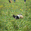 Cotswold Gundogs Shoot Skills Training Day 7d-166