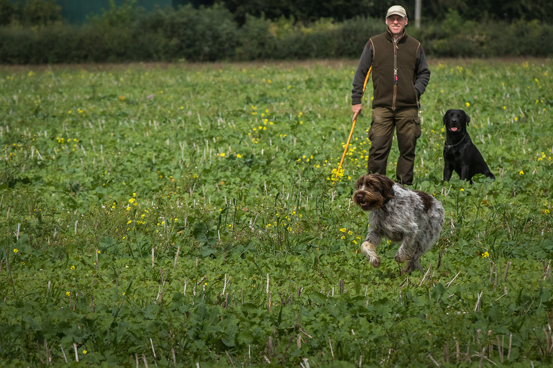 Cotswold Gundogs Shoot Skills Training Day 7d-148