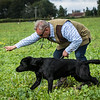 Cotswold Gundogs Shoot Skills Training Day 7d-234