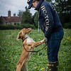 Cotswold Gundogs Shoot Skills Training Day 7d-193