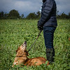Cotswold Gundogs Shoot Skills Training Day 7d-198