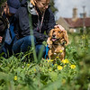 Cotswold Gundogs Shoot Skills Training Day 7d-115