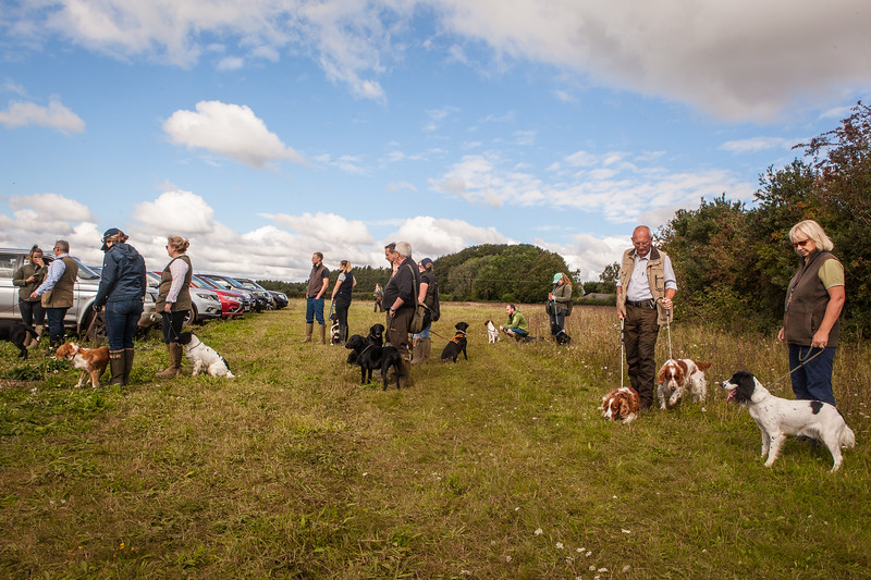 Cotswold Gundogs Shoot Skills Training Day 5d-7