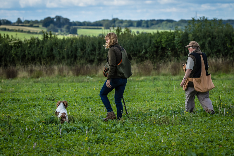 Cotswold Gundogs Shoot Skills Training Day 7d-75