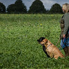 Cotswold Gundogs Shoot Skills Training Day 7d-187