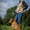 Cotswold Gundogs Shoot Skills Training Day 7d-201