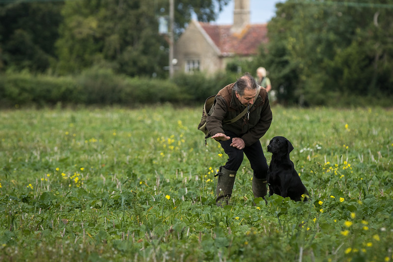Cotswold Gundogs Shoot Skills Training Day 7d-158