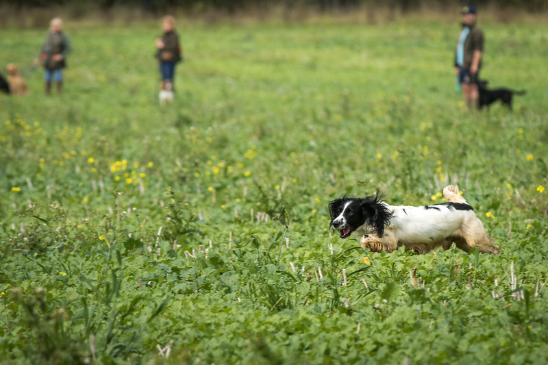 Cotswold Gundogs Shoot Skills Training Day 7d-165