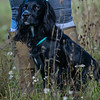 Cotswold Gundogs Shoot Skills Training Day 7d-2