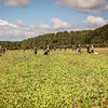 Cotswold Gundogs Shoot Skills Training Day 5d-15