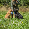 Cotswold Gundogs Shoot Skills Training Day 7d-71